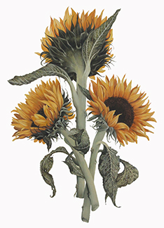 Botanical and Decorative Art