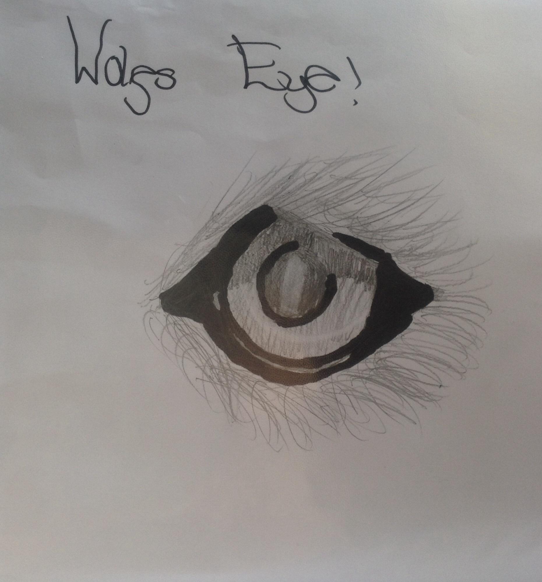 Wolfs eye