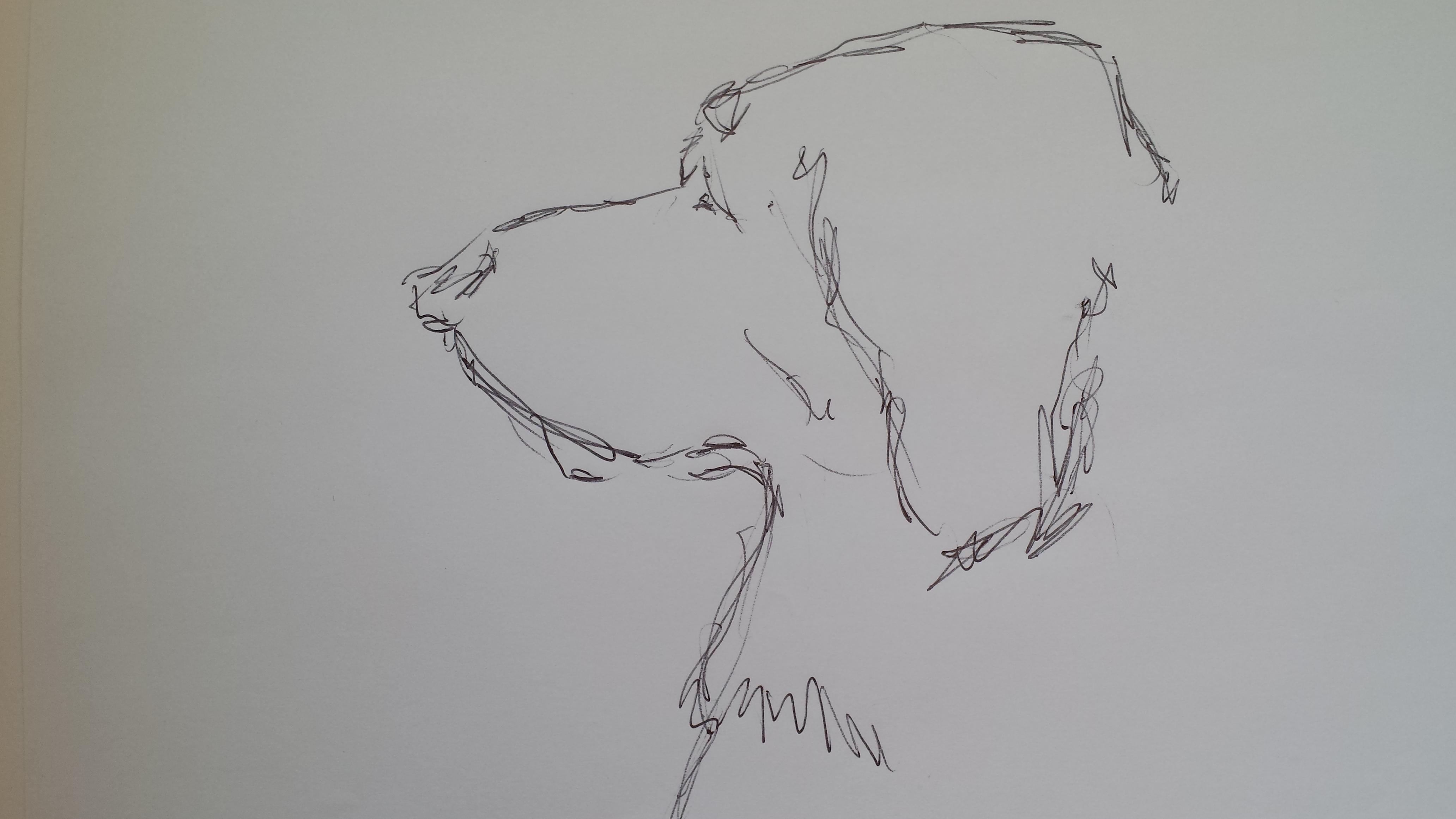Golden retriever sketch