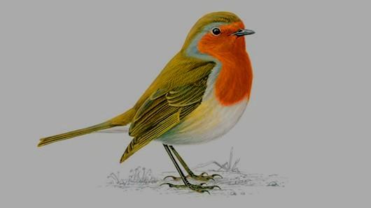 A Robins Visit 2